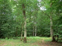foret-chateauroux-18503_w600